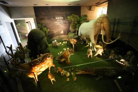 40萬年前曾生活在臺灣的生物