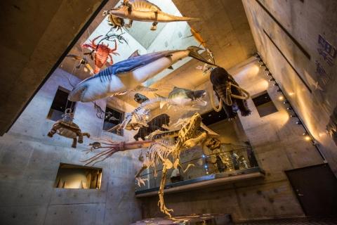 大滅絕展場吊著多種古代生物玩偶